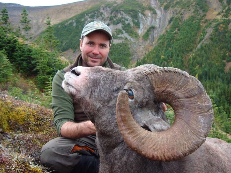 Alberta Big Horn Sheep Hunt
