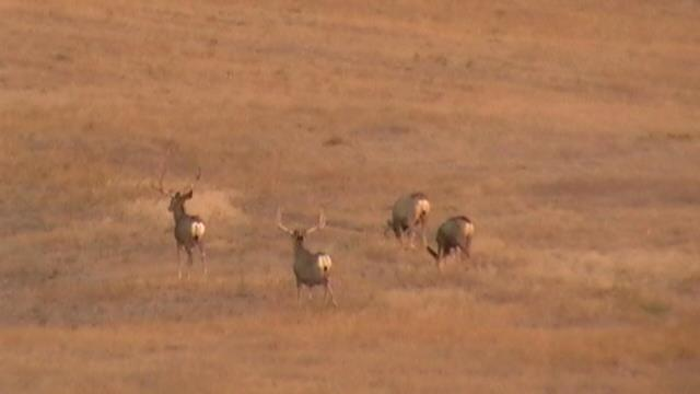 Northwest Nebraska Mule Deer Hunts